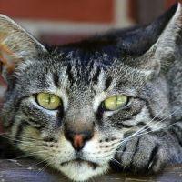 Стихи про котов на английском языке