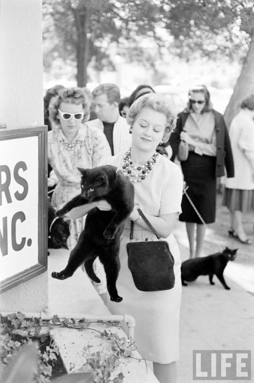 Black Cat Auditions In Hollywood, 1961 (12)