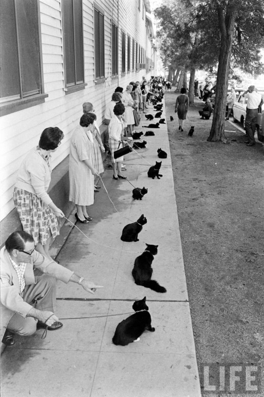 Black Cat Auditions In Hollywood, 1961 (2)