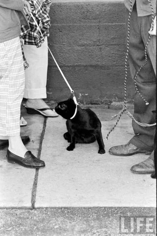 Black Cat Auditions In Hollywood, 1961 (4)