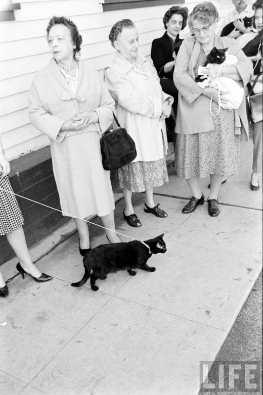 Black Cat Auditions In Hollywood, 1961 (5)