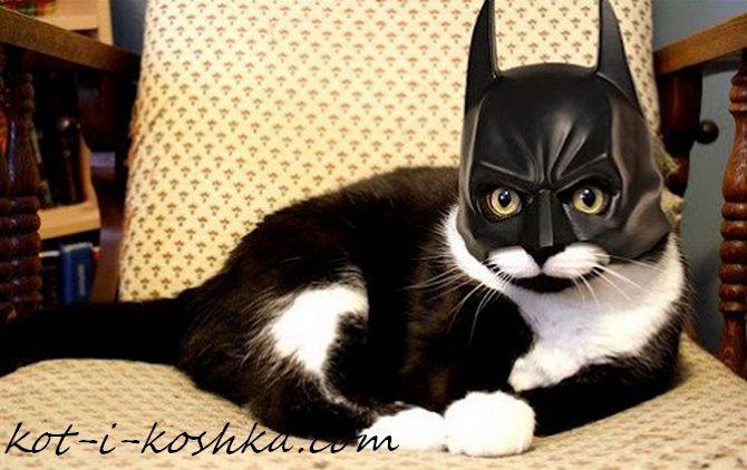 кот бэтмен (7)