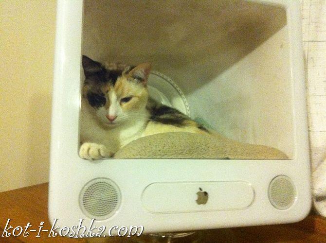 домик для кота (6)