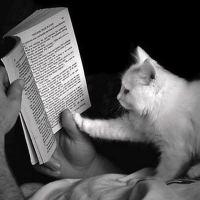 Читающие коты