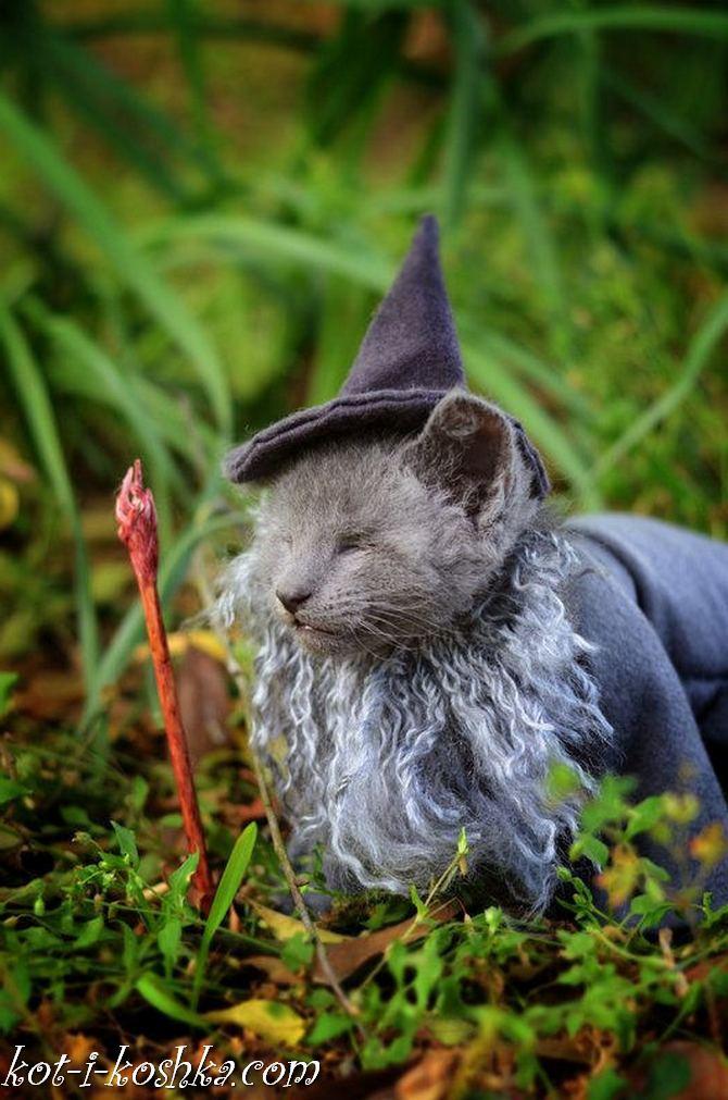 коты в костюмах (10)