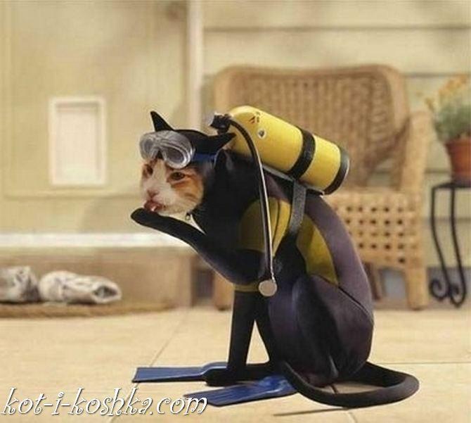 коты в костюмах (13)