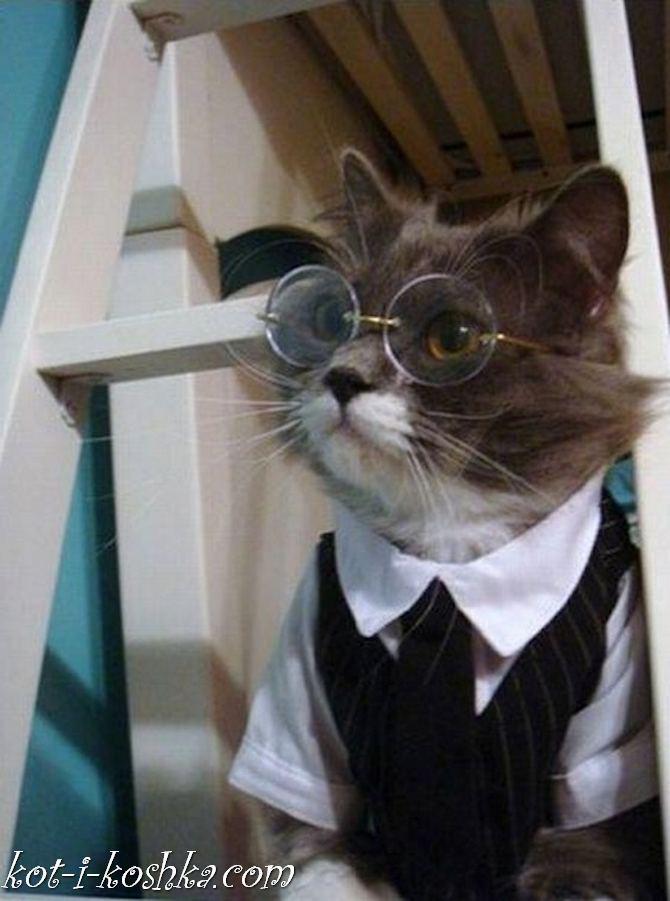 коты в костюмах (18)