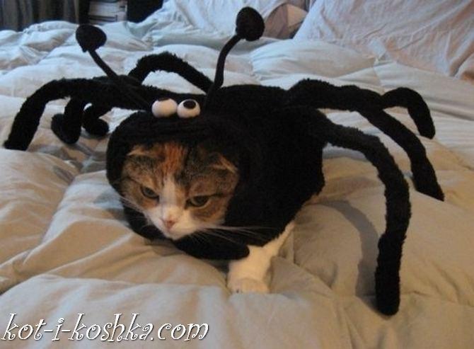 коты в костюмах (22)