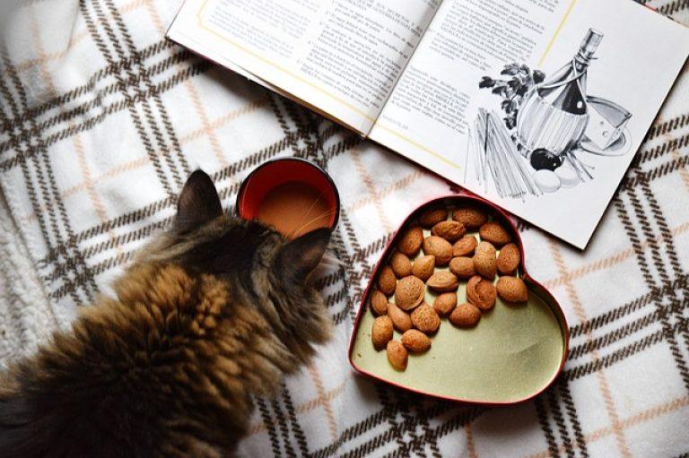 Почему кошка лазает по столам и как ее отучить от этого