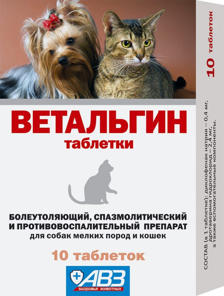 У кошки выкидыш причины симптомы и что делать