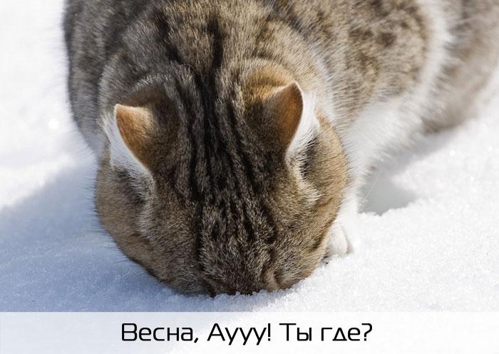 Обморожение уха - первая помощь. Кошка отморозила уши: что делать и как помочь. Что делать, если кошка отморозила уши
