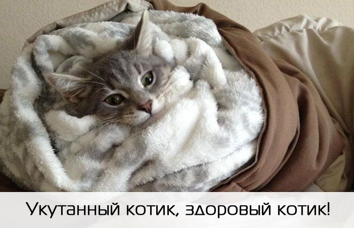 Кошка отморозила уши: что делать и как помочь. Что делать, если кошка отморозила уши