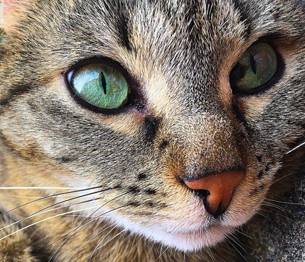 Почему кот храпит