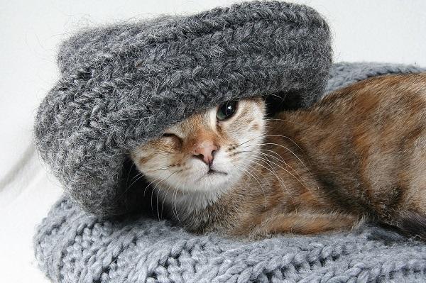 Глисты у кошки слизь в кале. В кале у кошки кровь и слизь что это может быть и как лечить