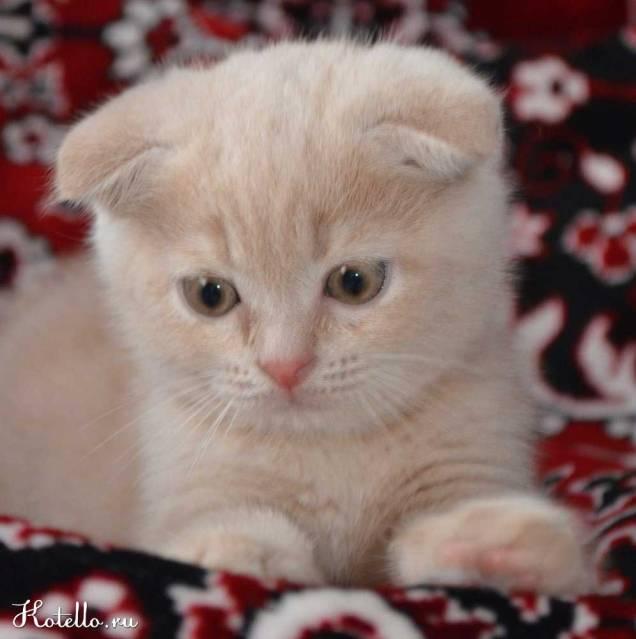 Котик Томик (2 месяца)