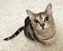 Болезни почек у кошек и их последствия для животного.