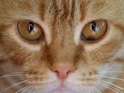 «Подруга» для домашнего кота, сделанная своими руками.