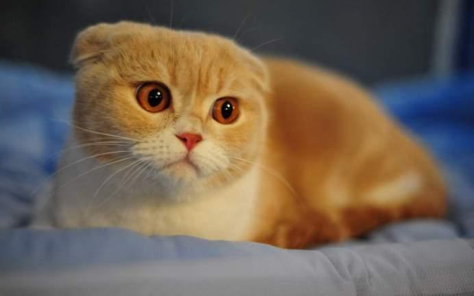 Как котенку сделать клизму.