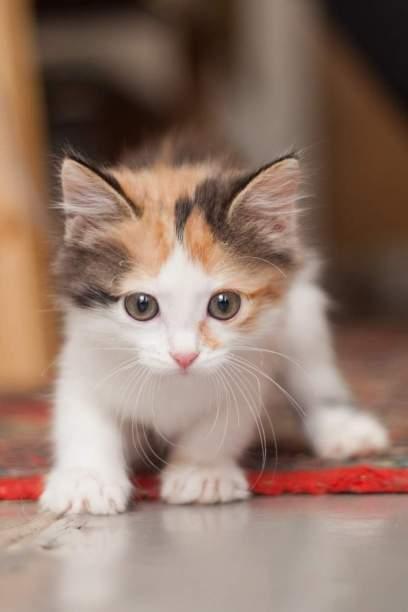 Учим котенка ходить в лоток: основные правила.