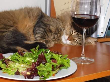Правильное питание кошек.