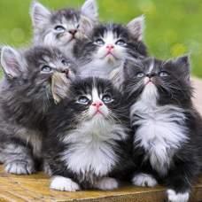 Кошки мутанты.