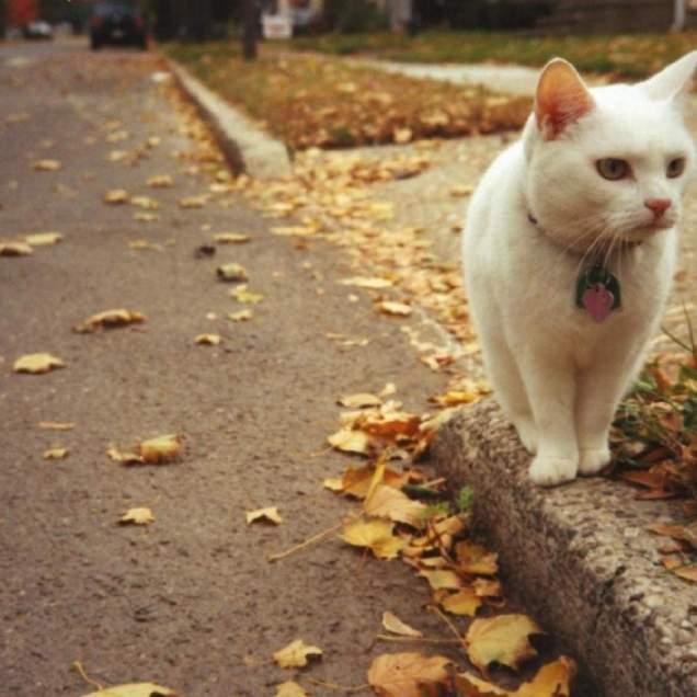 Рассказ про кота.