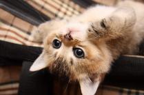 Некоторые котята разыгравшись сильно кусаются