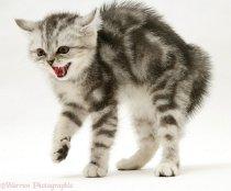 кошки становятся агрессивными в связи с нехваткой движения