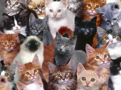 котят чаще всего приобретают в питомниках