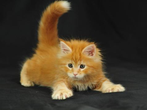 Загляните котенку под хвост