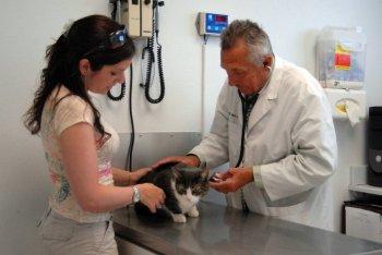 Опорожнять кишечник кошка должна минимум раз в сутки