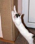 Рваные обои не повод обижаться на котенка