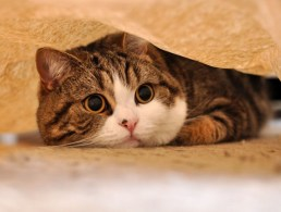 Питание кастрированного кота должно быть менее калорийным