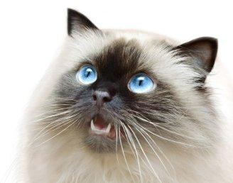 У каждой кошки должны быть здоровые зубки