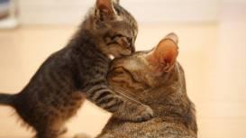 В процессе родов кошке может понадобиться помощь