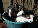 Необходимо научить котенка правильно обращаться с лотком