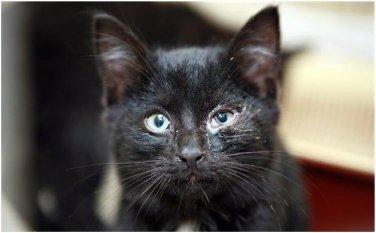 Повышение иммунитета - залог здоровья вашей кошки