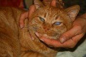 Слепая кошка живет такой же жизнью