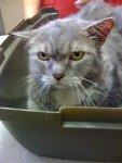У кошек, как и людей, могут болеть уши