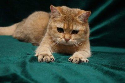 Если кошка выпустила когти, она не в духе