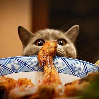 Иногда что-то вкусное заставляет кошку оказаться на столе