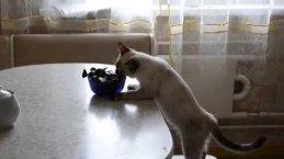 Порой кошке просто не хватает личного пространства