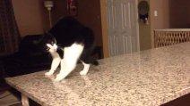 Кошки от природы верхолазы