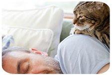 В поисках Вашего внимания и заботы, кошка устраивается у Вас на животике