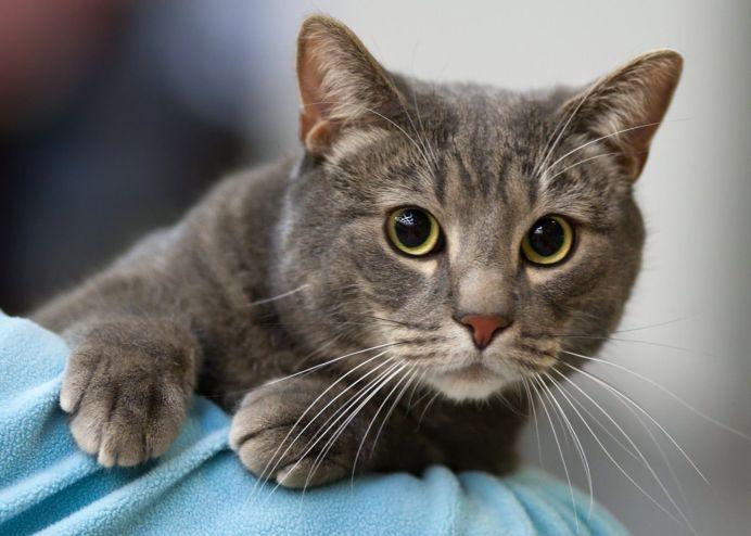 Корень валерианы является лекарством для кошки