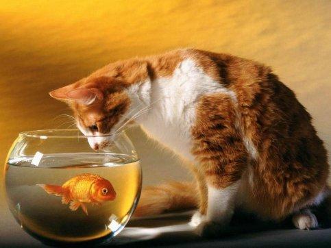 Занимайтесь воспитание кошки