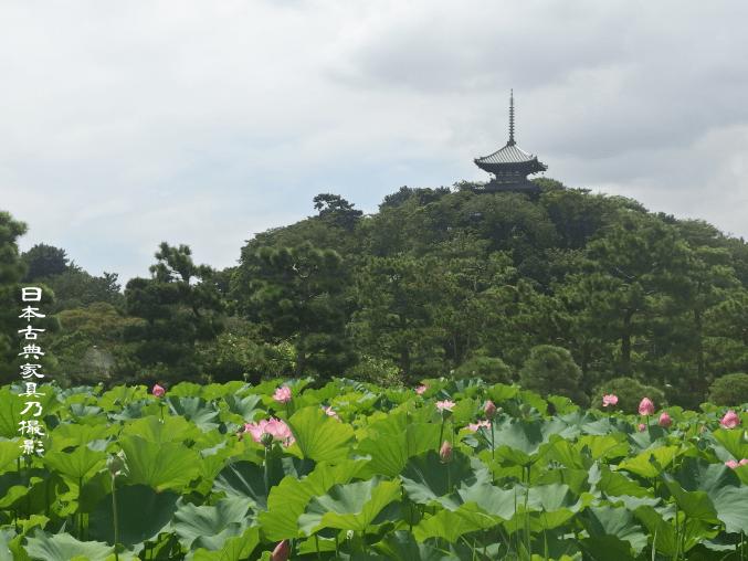 三渓園 三重の塔