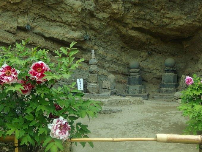 長寿寺 足利尊氏の墓 牡丹