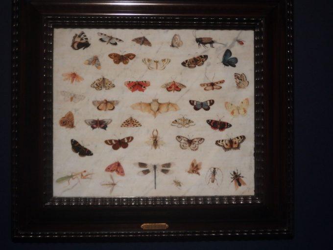 ヤン・ファン・ケッセル1世「蝶・コウモリ・カマキリの習作」ブリューゲル展