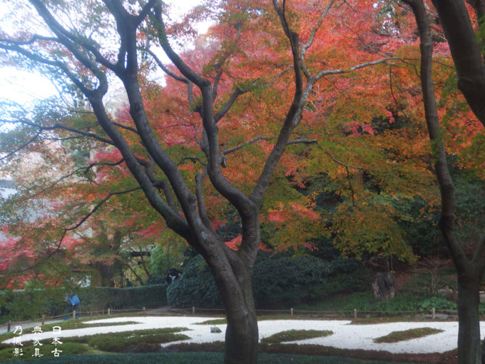 明月院 後庭園の紅葉